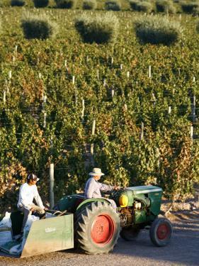Farmer Driving a Tractor in Lujan De Cuyo, Mendoza Region, Argentina, South America by Yadid Levy