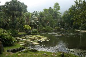 Jardim Botanico (Botanical Gardens), Rio de Janeiro, Brazil, South America by Yadid Levy