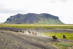 Wild Horses Running, South Iceland, Iceland, Polar Regions by Yadid Levy