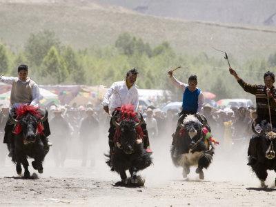 https://imgc.allpostersimages.com/img/posters/yak-racing-at-gyantse-horse-racing-festival_u-L-P5Y1810.jpg?p=0