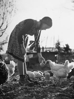 Small Flock of Chickens in Swiss Farmyard Being Fed by Girl of the Farm Family by Yale Joel