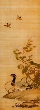 Mandarin Duck by Yanagisawa Kien
