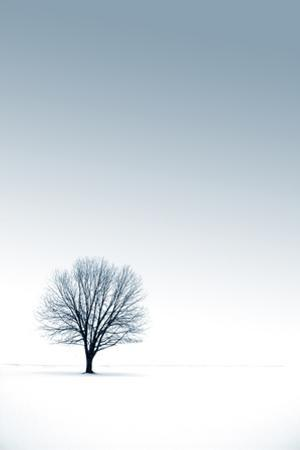 Winter Tree by yanc