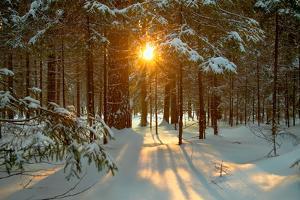 Winter Landscape by Yanika