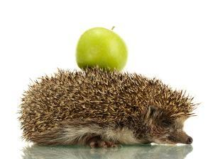 Hedgehog with Apple, Isolated on White by Yastremska