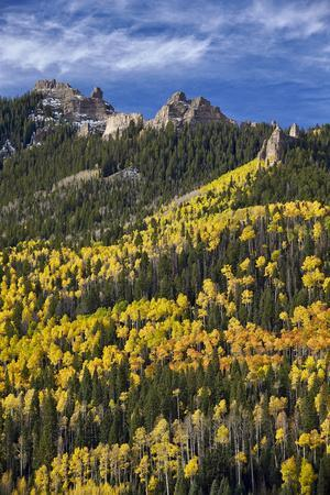 https://imgc.allpostersimages.com/img/posters/yellow-and-orange-aspens-with-evergreens-in-the-fall_u-L-PWFB7Y0.jpg?p=0