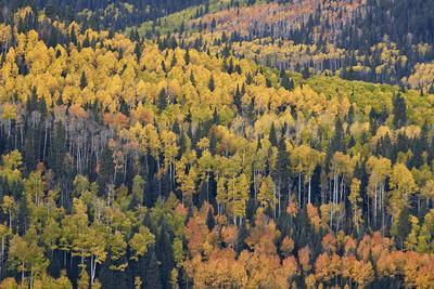 https://imgc.allpostersimages.com/img/posters/yellow-and-orange-hillside-of-aspen-in-the-fall-uncompahgre-national-forest-colorado-usa_u-L-PWFFJV0.jpg?artPerspective=n