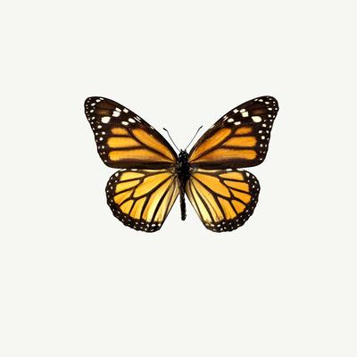 https://imgc.allpostersimages.com/img/posters/yellow-butterfly_u-L-Q10WAWG0.jpg?p=0