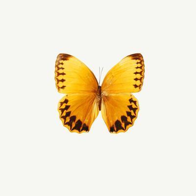 https://imgc.allpostersimages.com/img/posters/yellow-butterfly_u-L-Q10WAWJ0.jpg?p=0