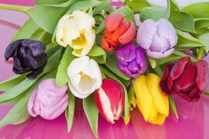 Bouquet of Assorted Dutch Tulips by YellowPaul