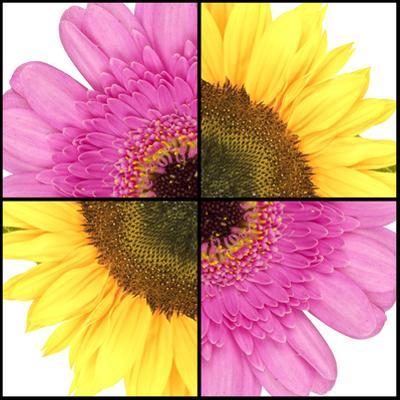 Square Collage of Sunflower and Gerbera by YellowPaul