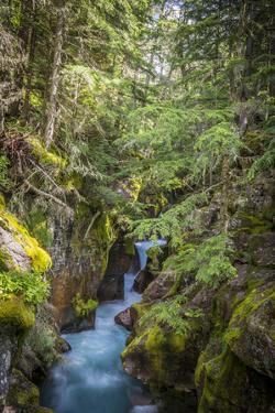 Avalanche Creek, Landscape, Flume, stream by Yitzi Kessock