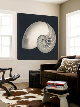 Shell I by YK Studio