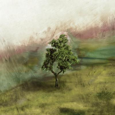 Lone Oak by Ynon Mabat