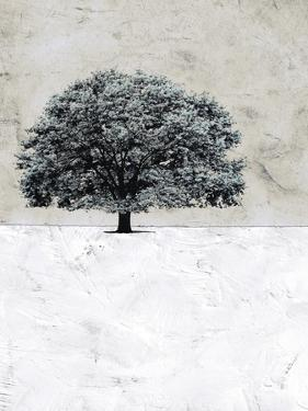 Old Black Tree by Ynon Mabat