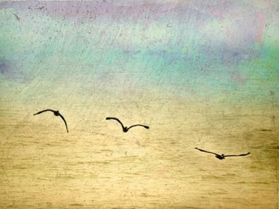 Seagulls in the Sky II by Ynon Mabat