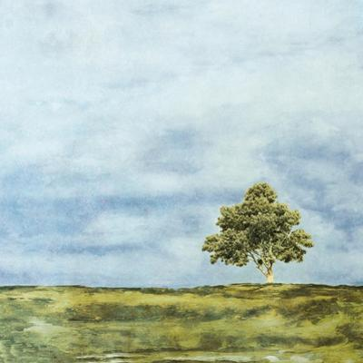 Summer Oak by Ynon Mabat