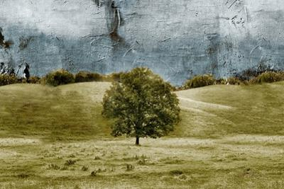 Tree in the Valley by Ynon Mabat