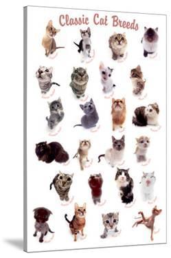 Cat Breeds by Yoneo Morita