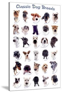 Dog Breeds by Yoneo Morita
