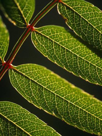https://imgc.allpostersimages.com/img/posters/yorkshire-yorkshire-dales-leaves-in-closeup-on-the-yorkshire-dales-national-park-england_u-L-P8XT750.jpg?p=0