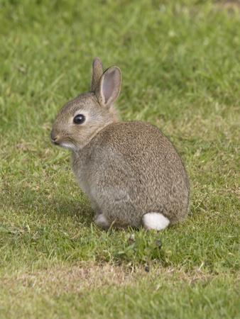 https://imgc.allpostersimages.com/img/posters/young-european-rabbit-in-sand-dunes_u-L-Q106ESW0.jpg?p=0