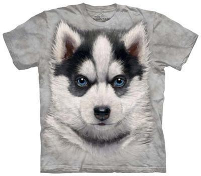 Youth: Siberian Husky Puppy