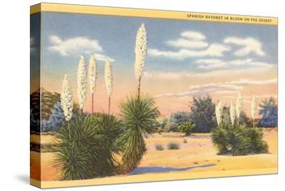 Yuccas, Spanish Bayonet in Desert