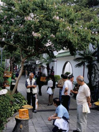 https://imgc.allpostersimages.com/img/posters/yuen-po-street-bird-garden-mong-kok-kowloon-hong-kong-china_u-L-P1K1I50.jpg?p=0