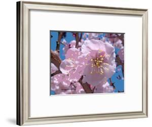 Japanese Cherry Blossom by Yuki Hearn