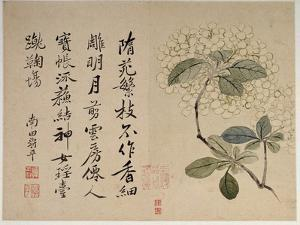 Hydrangeas, from an Album of Ten Leaves by Yun Shouping
