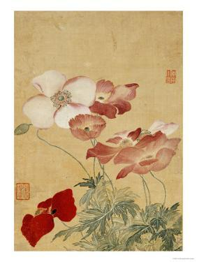 Poppies by Yun Shouping