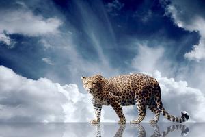 Predator Stay On The Sky Background by yuran-78