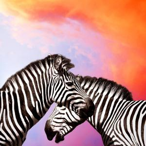 Two Zebras On The Sky by yuran-78