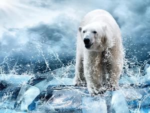 White Polar Bear Hunter On The Ice In Water Drops by yuran-78
