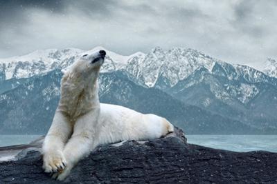 White Polar Bear on the Ice by yuran-78