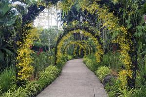 Botanical Garden in Singapore by Yury Zap
