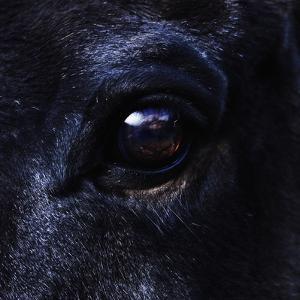 Eye of Horse by Yusuke Murata