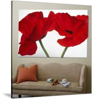 Loving Poppies by Yvonne Poelstra-Holzaus