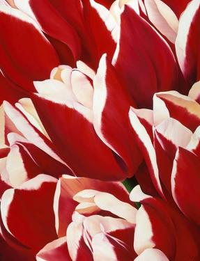 Most Beautiful Tulip V by Yvonne Poelstra-Holzaus