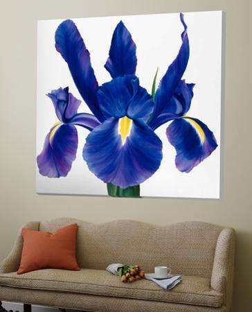 Purple Floral II by Yvonne Poelstra-Holzaus