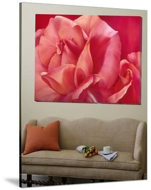 Shinning Pink Rose by Yvonne Poelstra-Holzaus