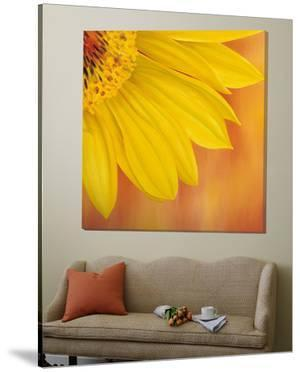 Sunflower II by Yvonne Poelstra-Holzaus
