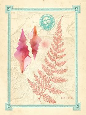 Pretty Ocean 4 by Z Studio