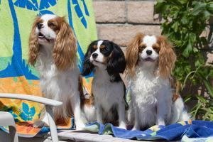 Cavaliers at a Pool Party by Zandria Muench Beraldo