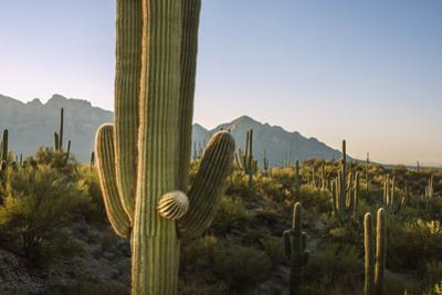 Santa Catalina Mountains in Arizona by Zandria Muench Beraldo