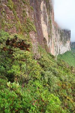 The Steep Rock Wall of Monte Roraima in Venezuela by zanskar