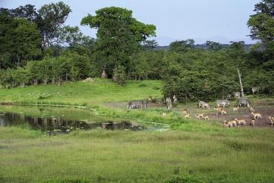 https://imgc.allpostersimages.com/img/posters/zebra-and-impala-at-waterhole-south-luangwa-national-park-zambia-africa_u-L-PWFLCW0.jpg?p=0