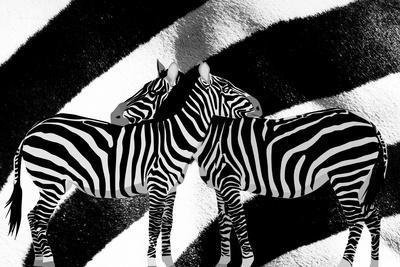 https://imgc.allpostersimages.com/img/posters/zebra_u-L-Q1CQIZM0.jpg?artPerspective=n