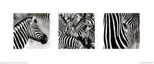 Zebras Triptych